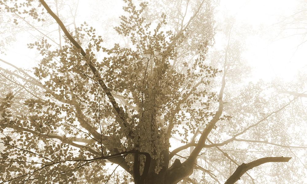 boom-laatste-feestje